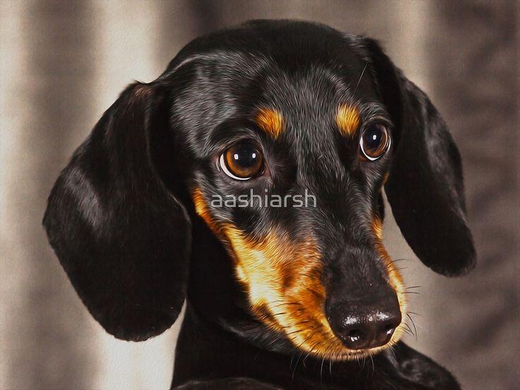 #Dachshund #Dog Water Color #OilPaint #Art #animal #canine #canvas