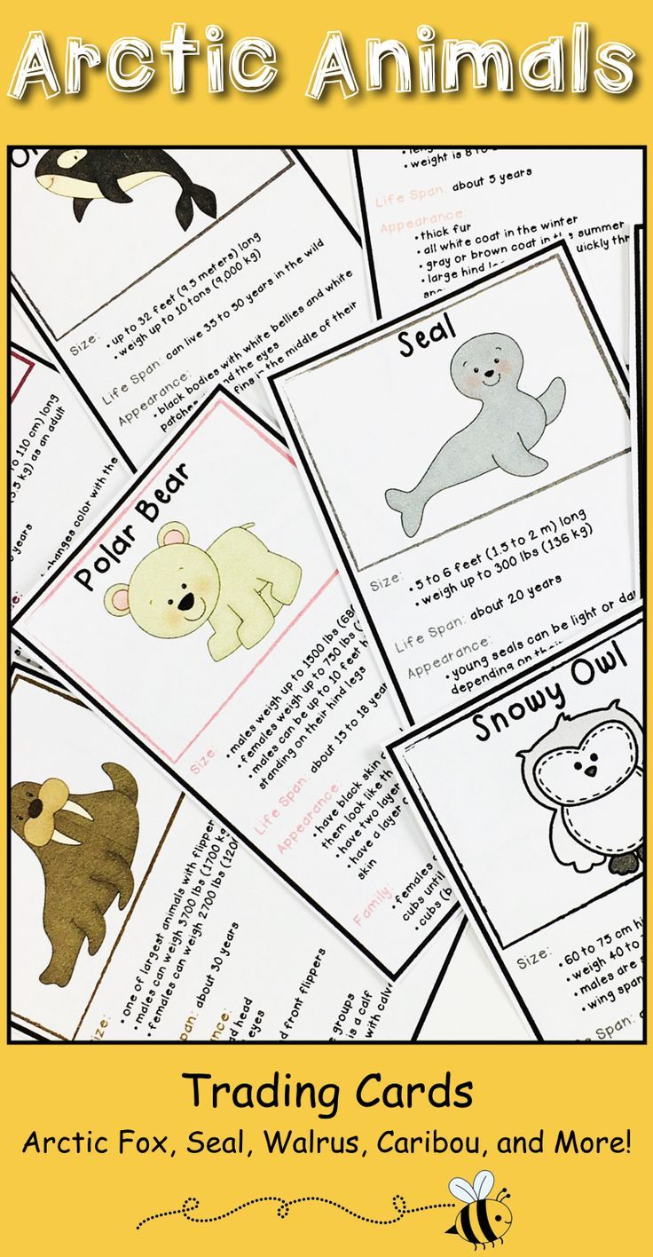 Make learning fun with these arctic animal trading cards! Your 1st, 2nd, 3rd grade classroom & home school students are sure to love them! You get trading cards that give factual information for: arctic fox, walrus, arctic hare, seal, polar bear, orca whale, caribou, and snowy owl. Learn about appearance, family, & more! Great for science lessons, research, projects, & informational text writing. Use for individuals, small groups, partners, or team activities. (first, second, third graders)