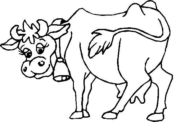 58 Best Cows Images On Pinterest