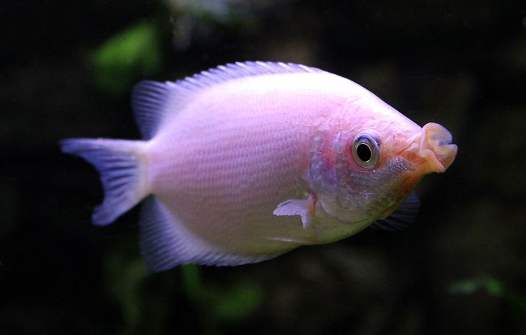 A lot of the most popular fish available in pet- and aquarium stores are surprisingly bad choices for beginners...