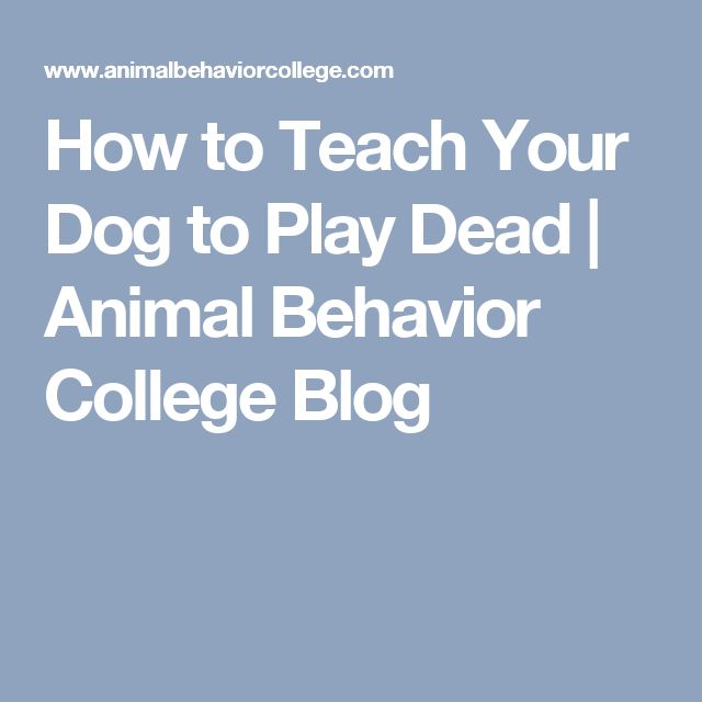 How to Teach Your Dog to Play Dead | Animal Behavior College Blog
