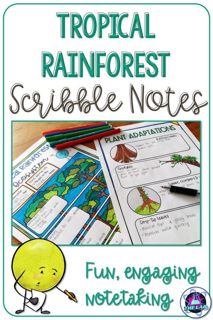Tropical Rainforest Ecosystem Scribble Notes Plant Adaptations Rainforest Middle School Science Teacher