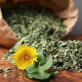 """Dandelion is a little weed with a lot of uses! 🌼 Here are a few of the treasured ways dandelion can be utilized, an excerpt from The Herbarium: """"The dandelion offers many benefits to those knowledgeable enough to use its treasures. 🌿 Ellingwood recommended #dandelionroot as an alterative for blood disorders and chronic skin eruptions, chronic #jaundice, #rheumatism, chronic gastritis, and mouth ulcers. In #TCM, it is used to reduce fire in the liver, and for #detoxification, hepatitis…"""