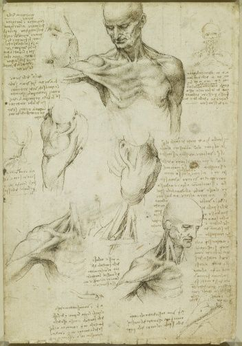 Leonardo da Vinci (Vinci 1452-Amboise 1519) - Recto: The superficial anatomy of the shoulder and neck. Verso: The muscles of the shoulder