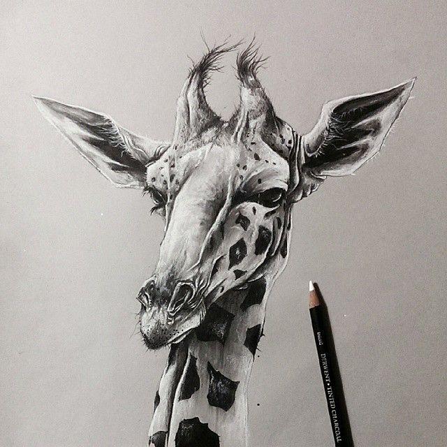 giraffe sol whiteside artist