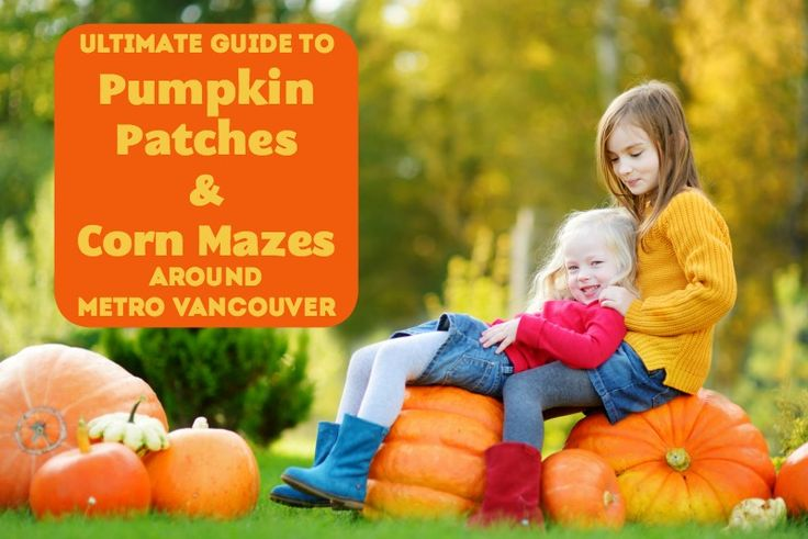 Pumpkin patches & corn mazes