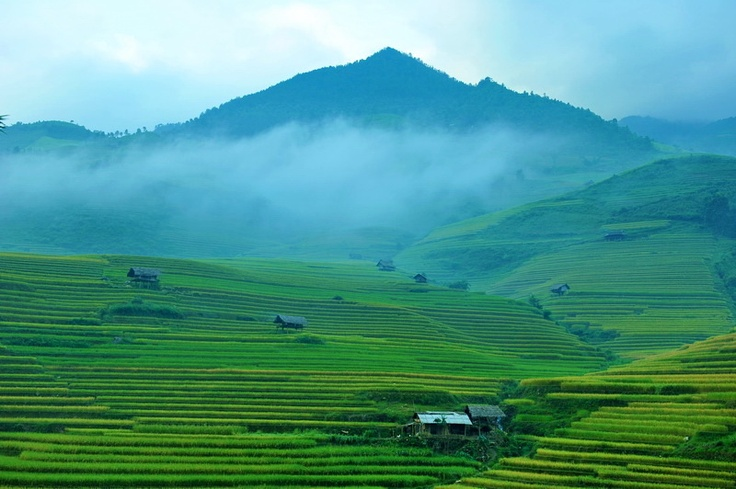 Green terrace rice field in early morning at Mu Cang Chai.