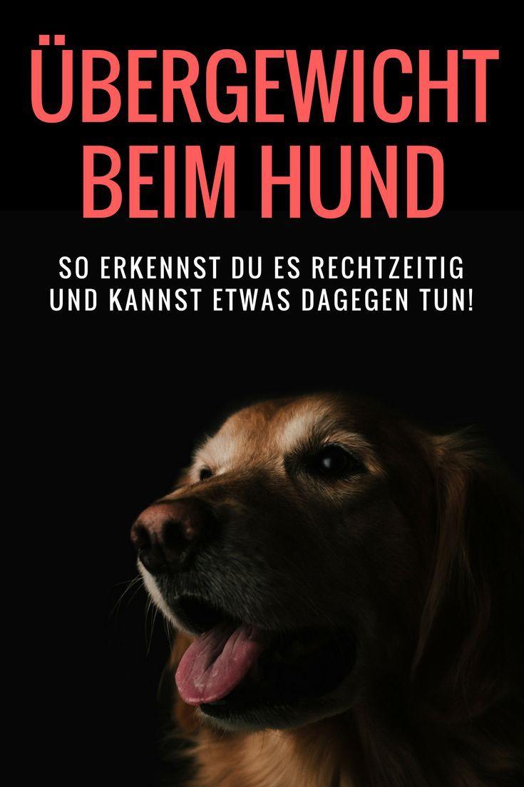 Gesunder Hund: Übergewicht - so erkennst Du es und kannst etwas dagegen tun!