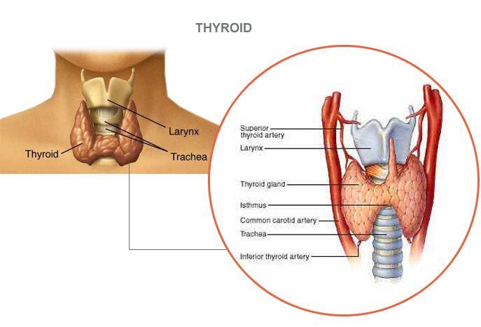 Good thyroid health depends on good gut health