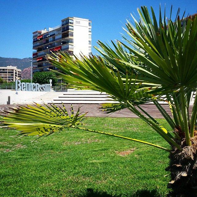 El 'letrero' de #Benicassim se encuentra en el #anfiteatro Pepe Falomir, junto a la #torre San Vicente del s. XVI. #cultura #eventos #musica #palmera #BenicassimParaiso #paraiso
