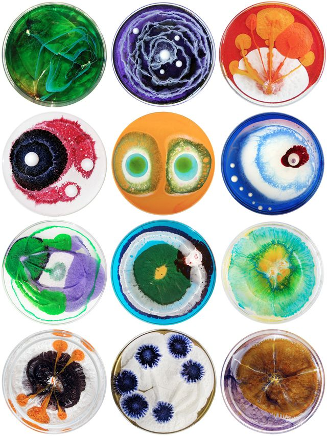 Petri dish paintings.
