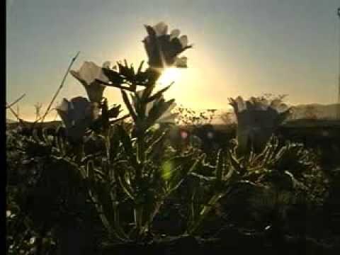 Video Oficial Desierto Florido - Región de Atacama