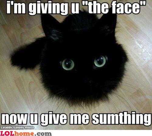 The FaceCat Eye, Black Kitty, Real Life, Fur, Baby Animal, Big Eye, Green Eye, Blackcat, Black Cat