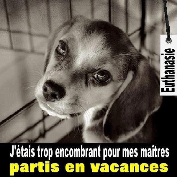 Les animaux sont des êtres aimants pas des objets!!!!