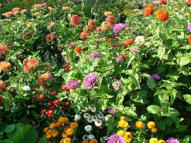 Protege tu jardín de todo tipo de plagas con estos métodos eco-amigables, que además son económicos.