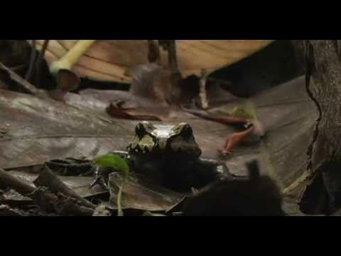Vida: Un hermoso documental sobre la selva peruana
