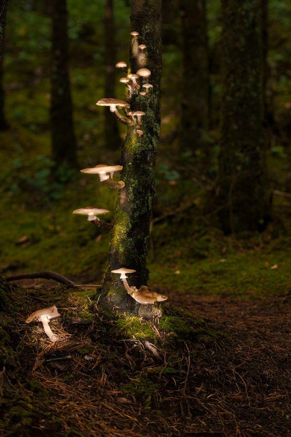 "theendlessforest: "" By the Mushroom Light by Jarrett Porst """