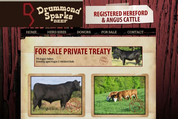 Getting Started in the Cattle Business in Virginia