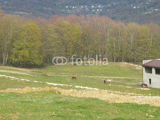 Country landscape, horses on green meadow, forest and village on the distance