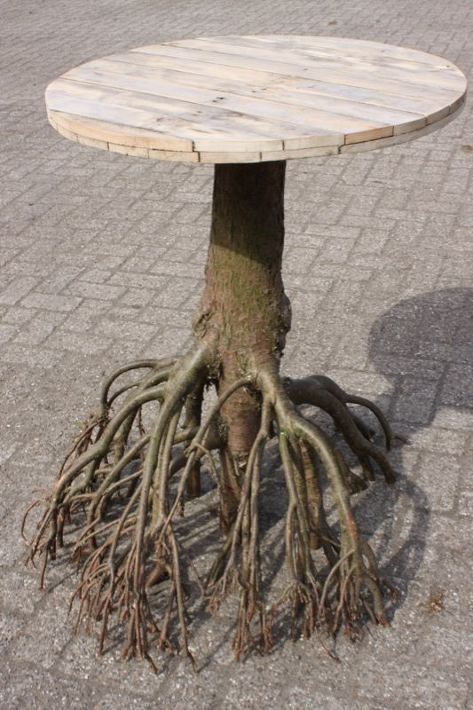 If I plant this in my garden would I get a huge table in a few months?