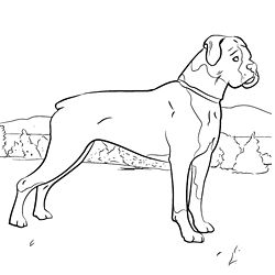 44 best images about dog crafts on pinterest shetland for Printable boxer dog coloring pages
