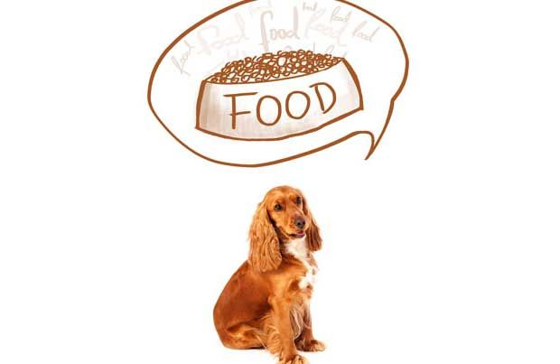 Choosing the Best Dog Food -30% Protein 18% Fat - Chicken as 1st ingredient