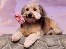 diamante diy pittura animale diamante punto croce di cristallo diamante quadrato set unfinish decorativi diamante ricamo cane(China (Mainland))