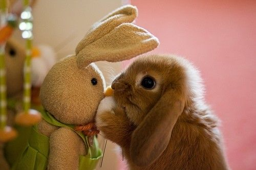 super schattig konijntje