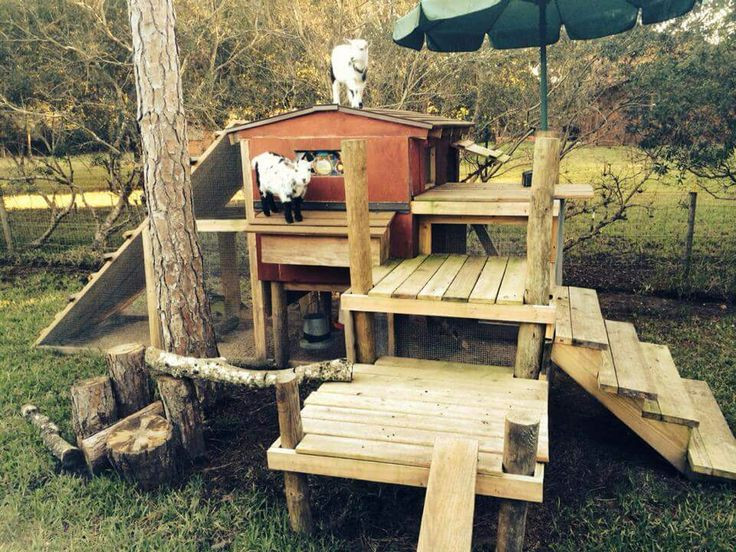 1000 Images About Goat Shelter Ideas On Pinterest A
