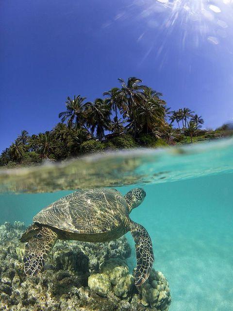 ウミガメとシュノーケリング。マウイ島旅行の観光アイデアまとめ。