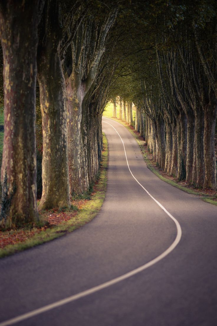 Tree tunnel (Alsace, France)