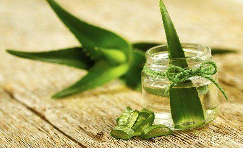 We weten allemaal wat de geweldige voordelen van aloë vera zijn. Deze medicinale plant met zijn enorme eigenschappen kan je erg makkelijk thuis verbouwen.