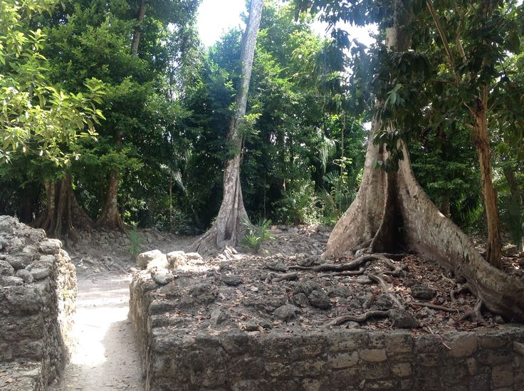 Amazing trees at the Maya site of Chacchoben, south of Quintana Roo, only at 70 km of Mahahual, where Eco Hotel Maya Luna is a perfect getaway to plan your trip