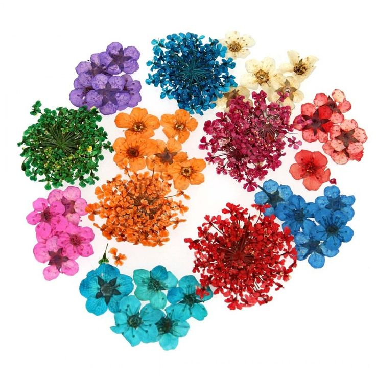 34 best my favorite bm nail art supplies images on for Dried flowers craft supplies