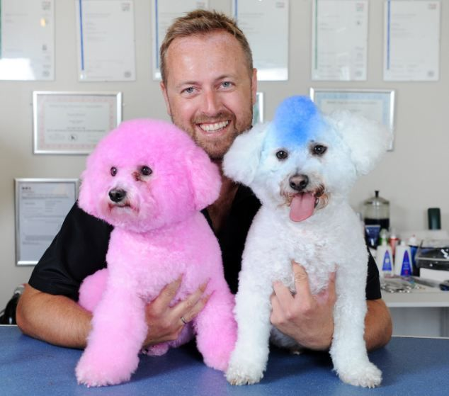b000mba: Mixed Inspirations: Dye Dogs