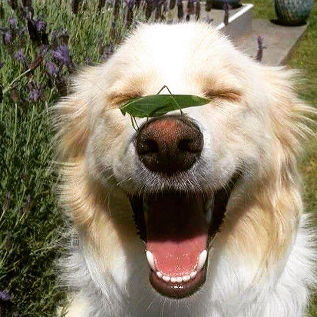 """""""Plano de vida: ser tão tranquilo e feliz quanto esse cachorro! ❤️"""""""