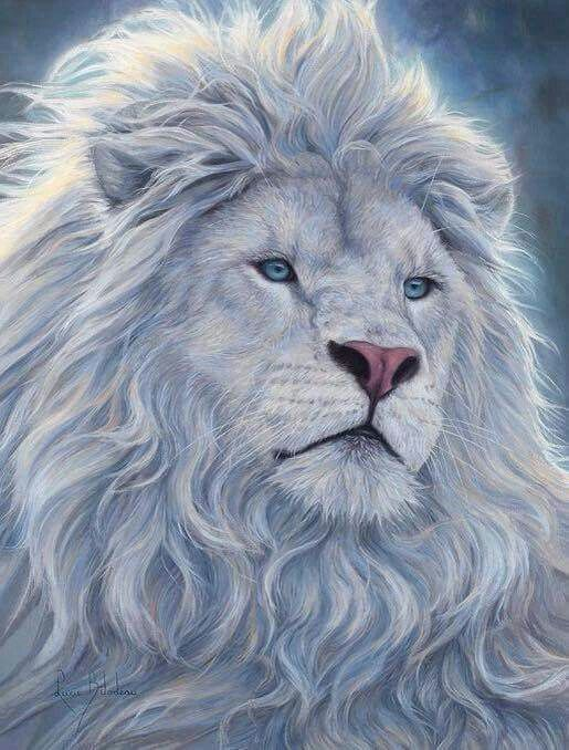 White lion More