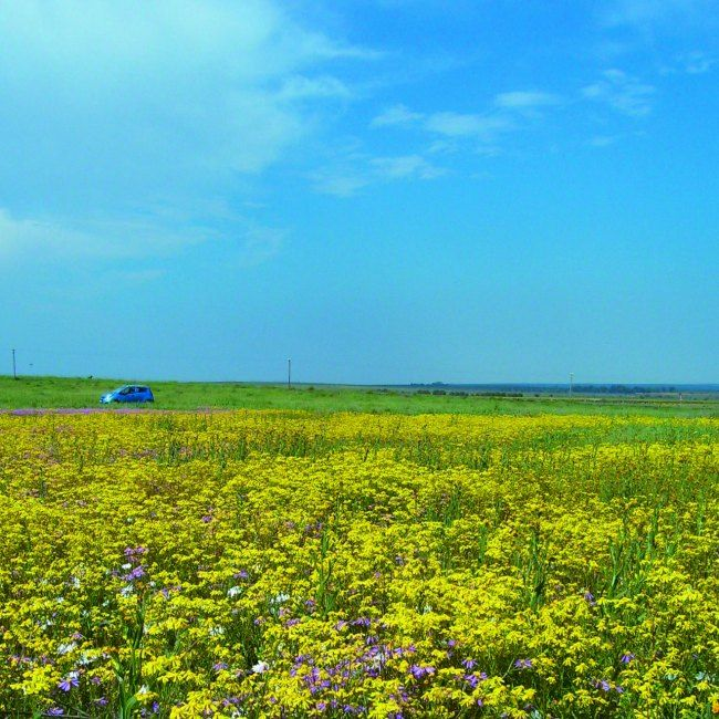 Veld flowers in Nieuwoudtville #SouthAfrica