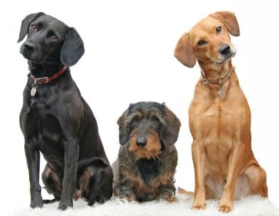 DogAware.com offers nutrition and health information on for dogs.