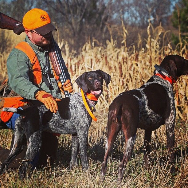 Best Pheasant Hunting Dogs