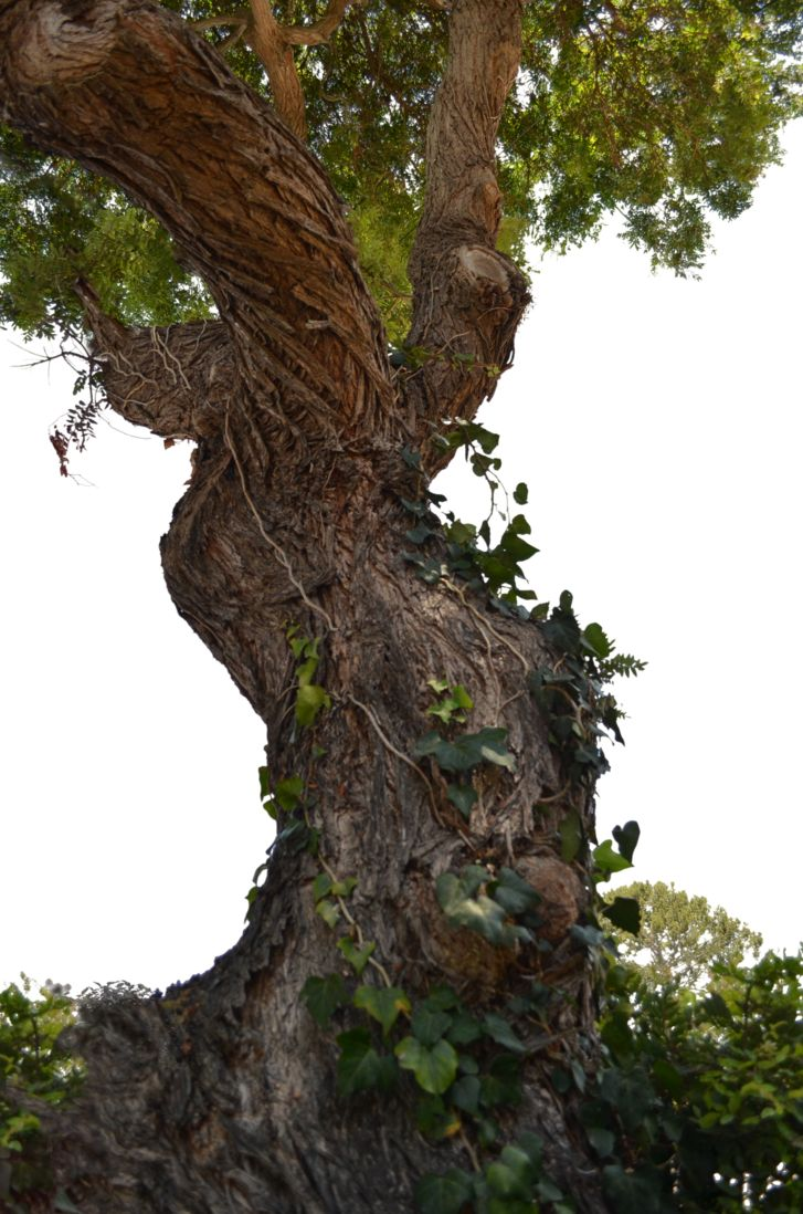 Tree Old Tree 1 On Street Stock Photo 0716 Png Tree Tree Artwork Twisted Tree