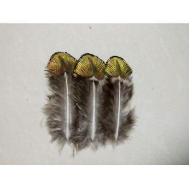 Золотые перья павлина 10-15 см. 10 шт