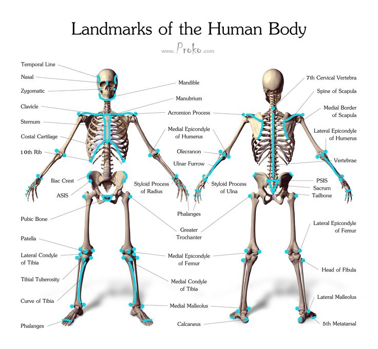 A Ad D Cc C B D A Anatomy Study Anatomy Reference on 4 By 5 Size Skeleton Diagrams