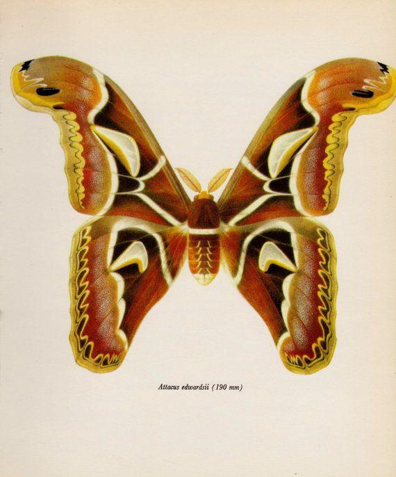 P Moth Decorator 17 Best images about m...