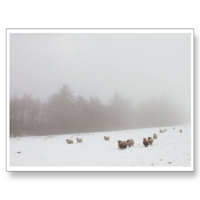 Sheep in the Mist Postcards - North Yorkshire Moors National Park