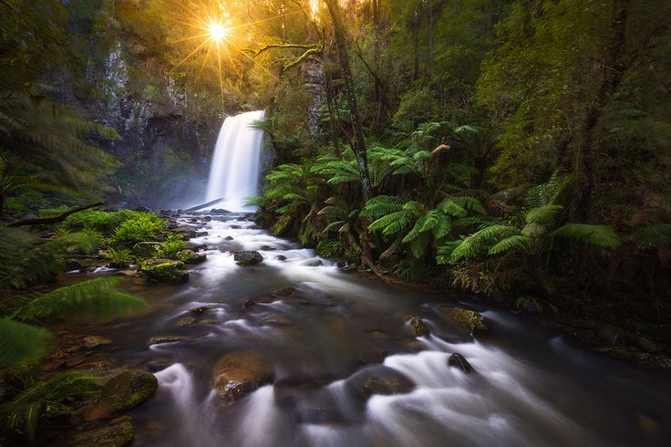 Ray Of Hope - Hopetoun Falls, Great Otway National Park, Victoria by Dylan Gehlken