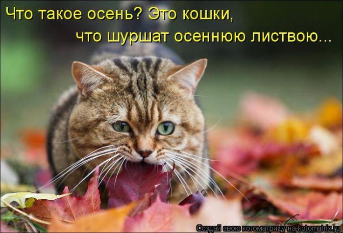 #интересное  Забавные животные (50 фото)   Прикольные картинки       далее по ссылке http://playserver.net/?p=143109