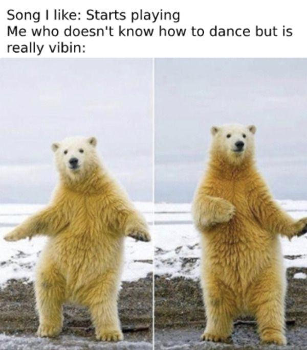 Dance Bear Vibin Wholesome Meme In 2020 Math Memes Funny Funny Math Jokes Stupid Funny Memes