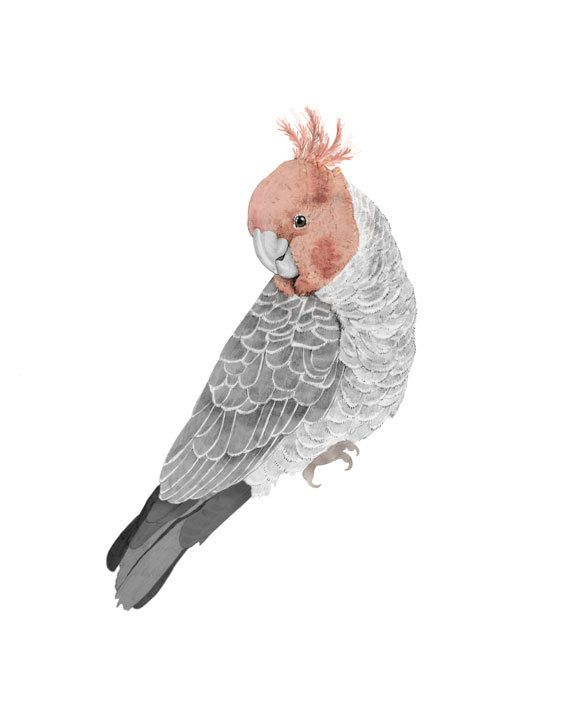 GANG GANG COCKATOO is a fine art print from an original Illustration. By Emily Beth