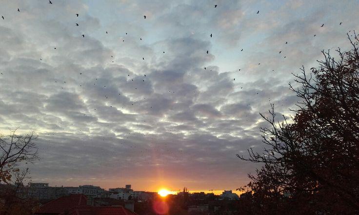 Beautiful sunset !! Birds all over the sky 🔝